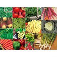 Gemüsesamen Bestseller