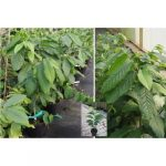 Obstpflanze Bestseller