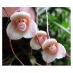 Orchidee Bestseller